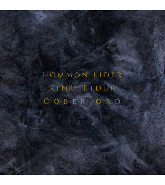 Common Eider, King Eider | Cober Ord - Palimpseste
